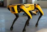 Robot Köpekler İş Başında