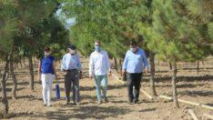Başkan Büyükerşen'den Ağaç Dede'ye Teşekkür