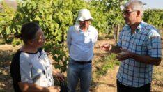 Eskişehir'de Organik Üzüm Yetiştiriciliğinin Yapıldığı Tek İlçe: Günyüzü