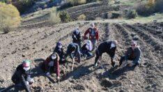 Sarıcakaya'da İlk Lavanta Fidesi Dikimi Gerçekleştirildi