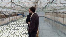Sarıcakaya'da Yüzen Marul Projesi