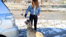 MHP İl Yönetimi , Kar ve Soğuğa Rağmen Sokak Hayvanları İçin Sahada