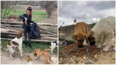 MHP Sokak hayvanlarına sahip çıkmaya devam ediyor