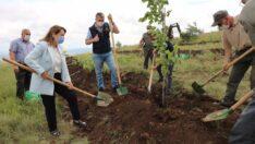 Bal Ormanı'nda sonuçlar alınmaya başlandı