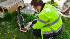 Tam kapanmada sokak hayvanları yalnız değil